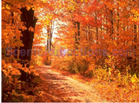 Colors of Autumn Screensaver screenshot