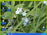 ExterPassive Video Wallpaper screenshot