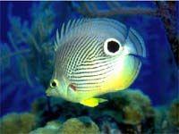 Free Marine Aquarium Screensaver screenshot