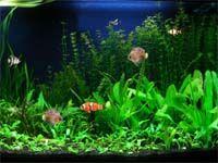 Free Aquarium Fish Screensaver screenshot
