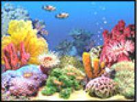 3D Tropical Fish Aquarium. Scene 3 3.0 download page