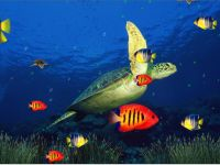 Marine Life Aquarium 3D Screensaver