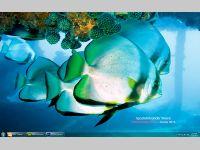 Fish Calendar Windows Theme